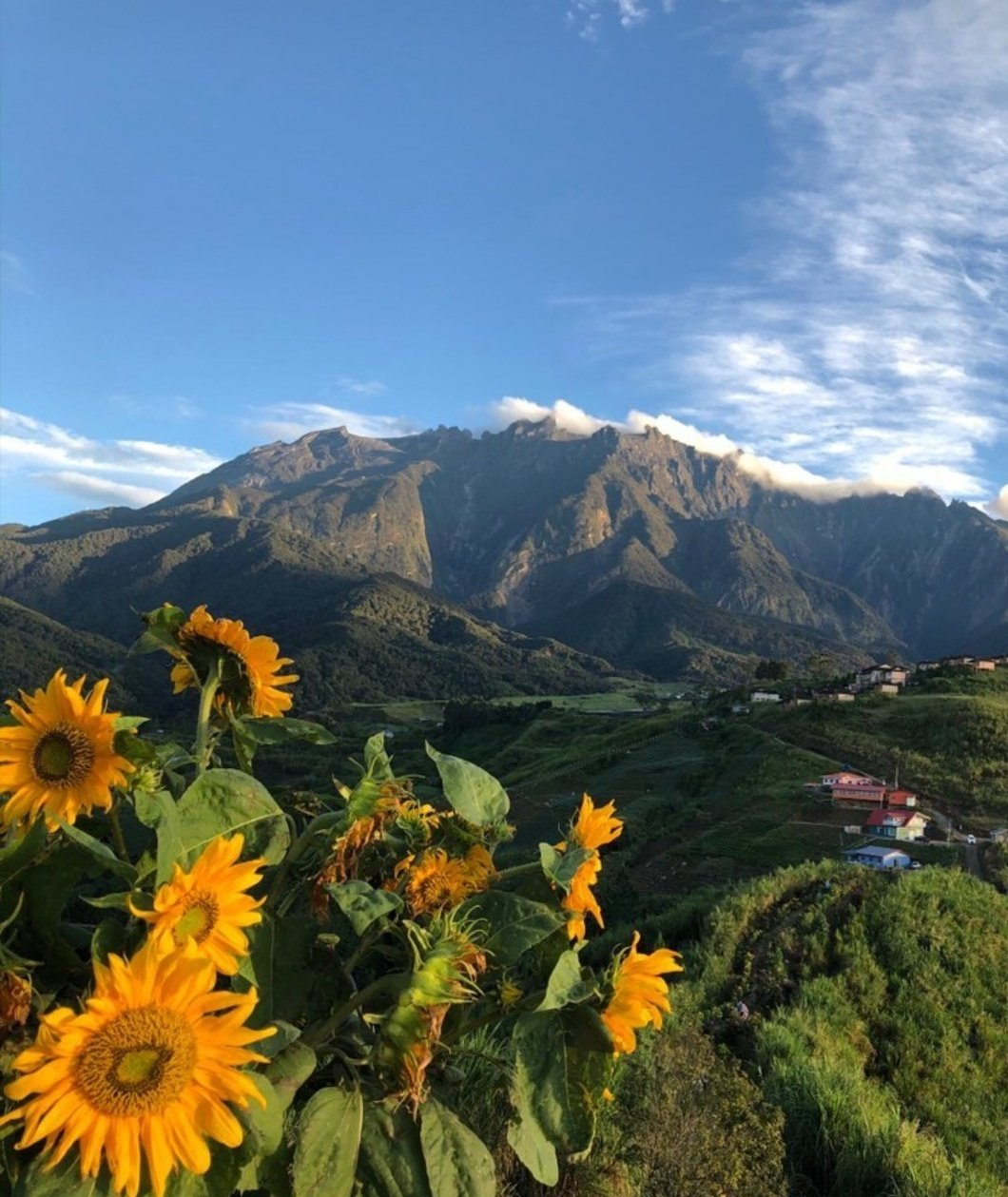 Photo: Sosodikon Hill offer some spectacular views of Mount Kinabalu in the morning light. Photo credit @xchantelleyst