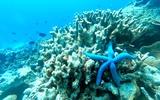 Thumbnail: 4D3N Semporna Dive & Bohey Dulang Hike