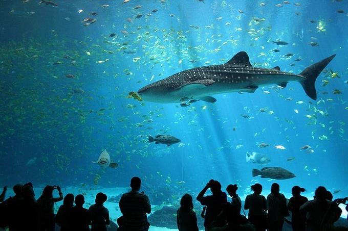 Photo: Whale Shark