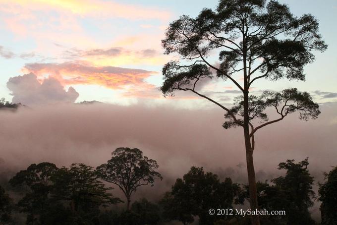 Photo: Maliau Basin, Sabah